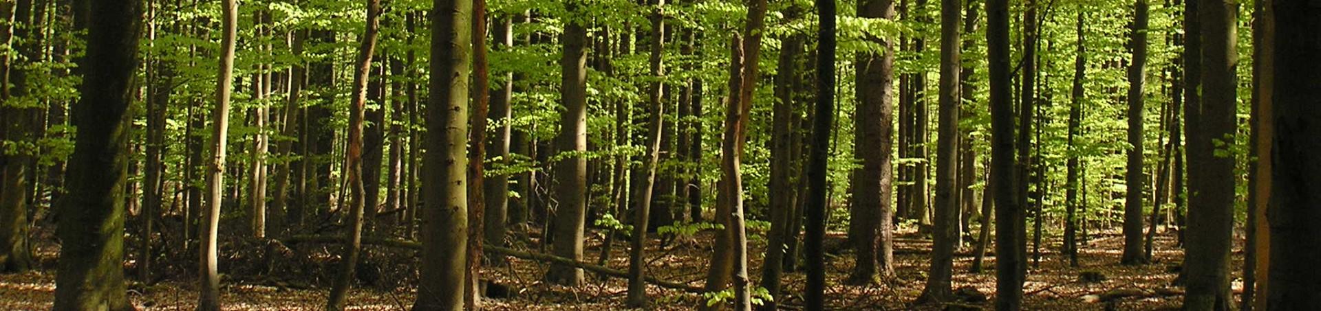 Wir sägen direkt bei Ihnen im Wald
